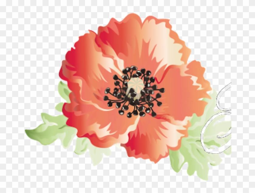 Poppies #292146