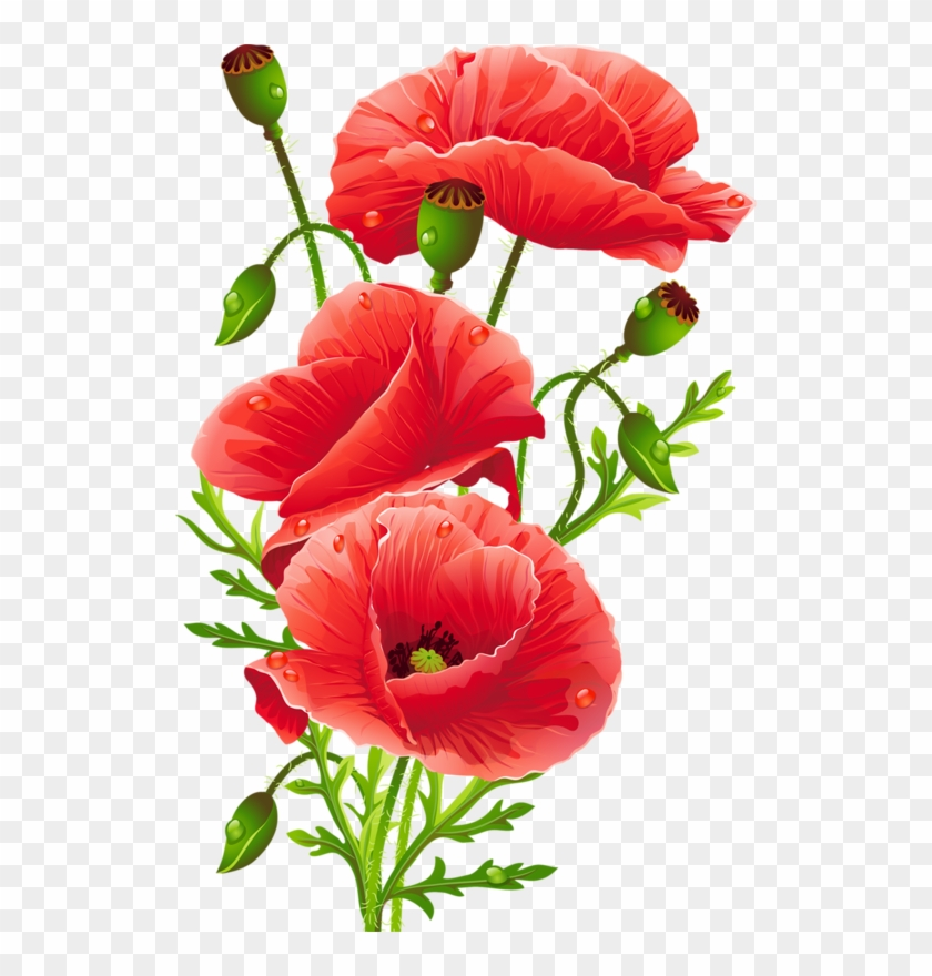 Flower Bouquet Common Poppy Floristry