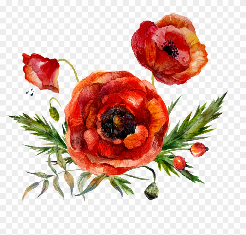 Watercolor Painting Flower Poppy - Watercolor Painting Flower Poppy #292161