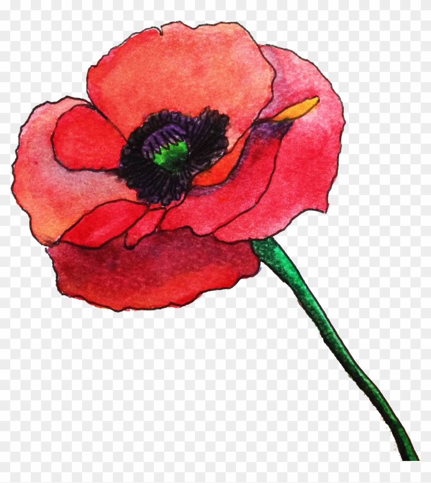 Water, Poppy Painted By Me Abstract Water, Rose Pineapple - Poppy Png Watercolour #292164