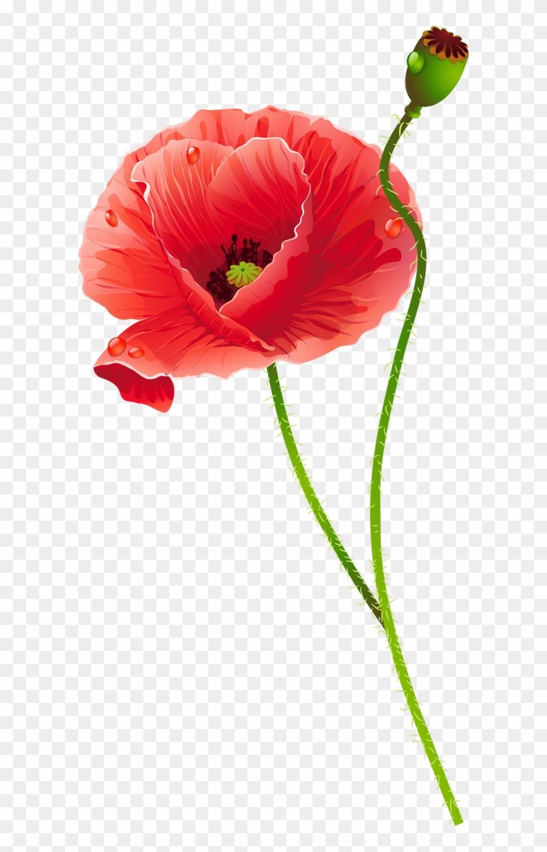 Com/uploads/posts/2015 02/1423552014 Poppies 05 - Маки Вектор Png #292166