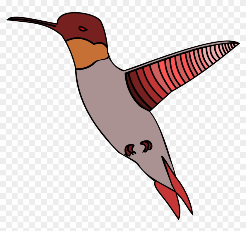 Humming Bird - Vector Graphics #292170