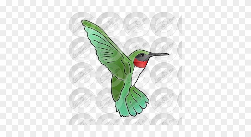 Hummingbird Picture - Hummingbird #292195