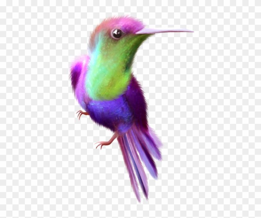 Beauty Hummingbird Free Clip Art - Clip Art #292205