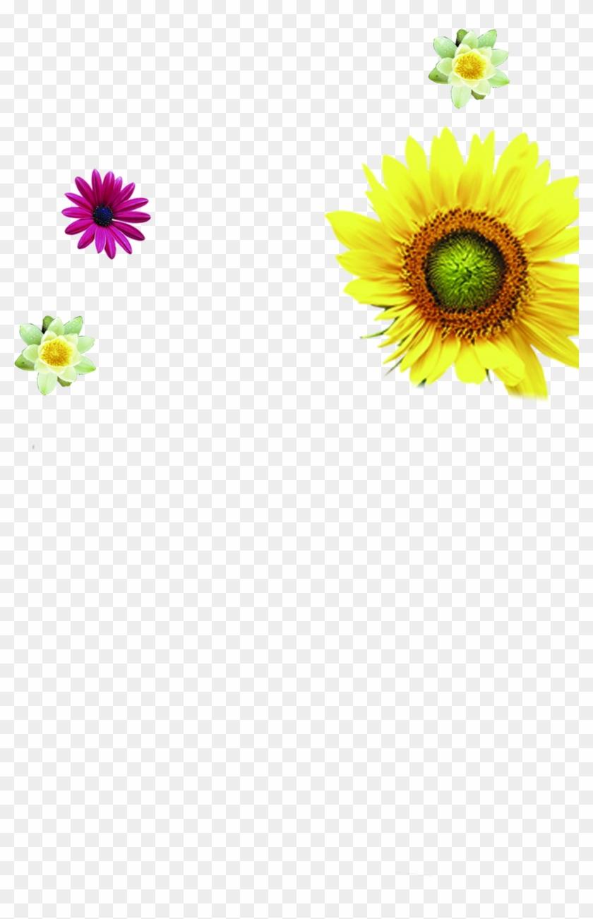 Opened Golden Sunflowers Cartoon - Opened Golden Sunflowers Cartoon #292366