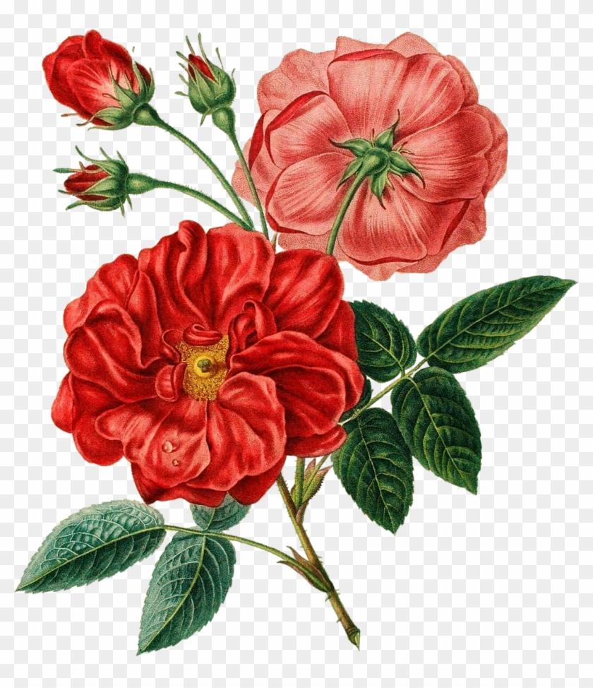 Flower Bouquet Red Poppy - Flower Bouquet Red Poppy #292483