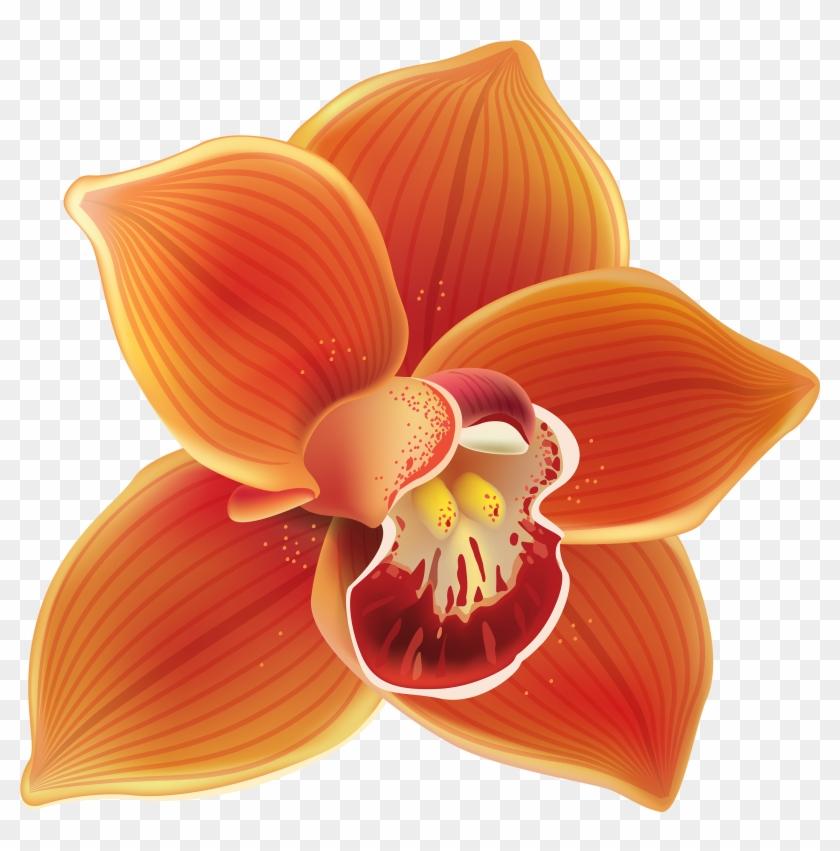 Orchid Clip Art - Orange Orchid Png #292320
