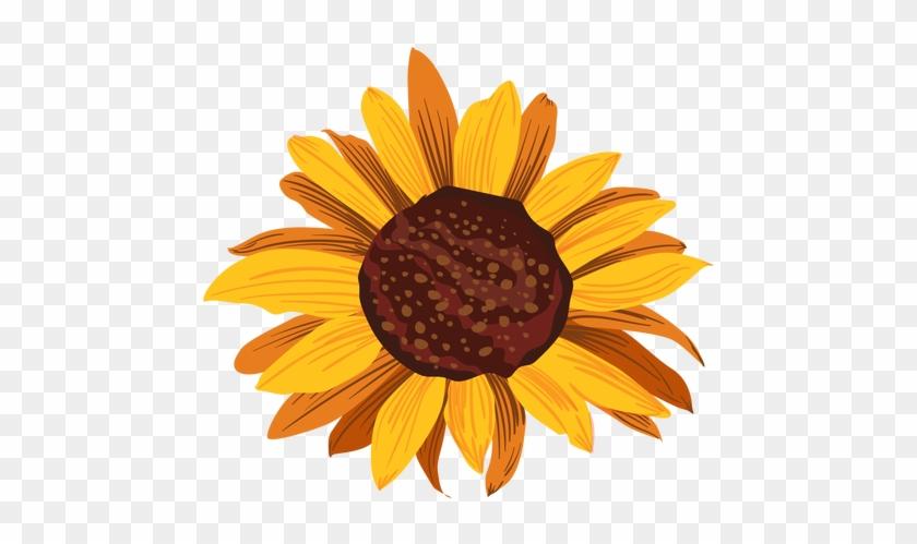 Sunflower Head Drawing Transparent Png - Girassol Desenho #292459