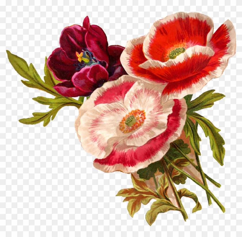 Antique Images Vintage Poppy Flower Clip Art Botanical - Poppy Flower Clip Art #292488