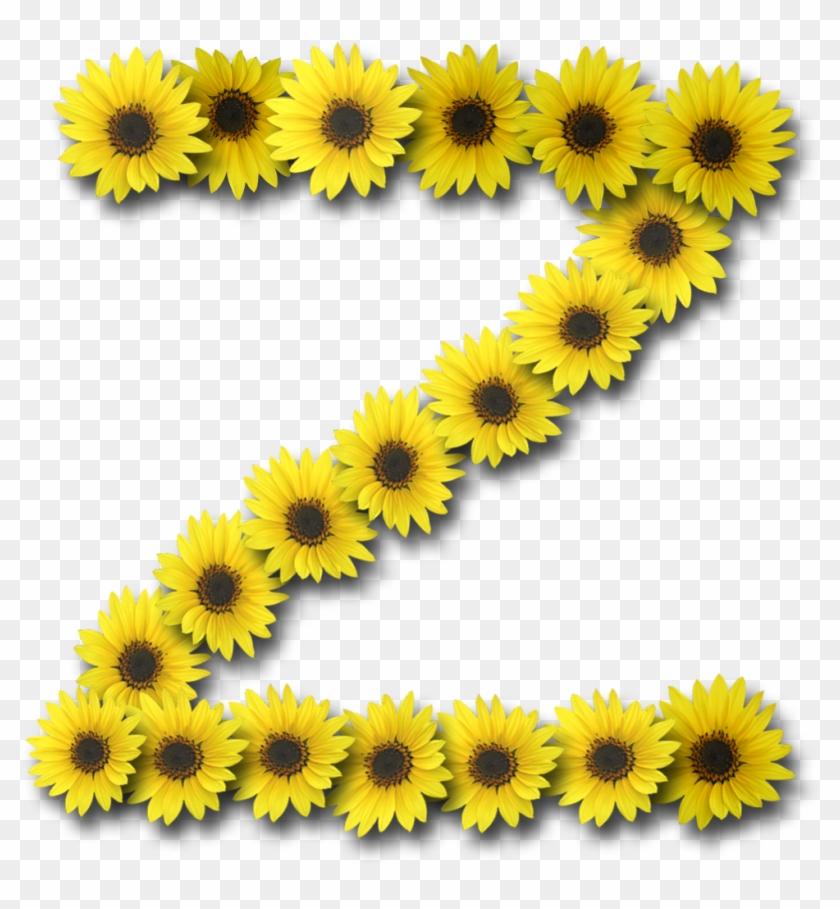 Capital Letter Z1 Sunflower - Common Sunflower #292499