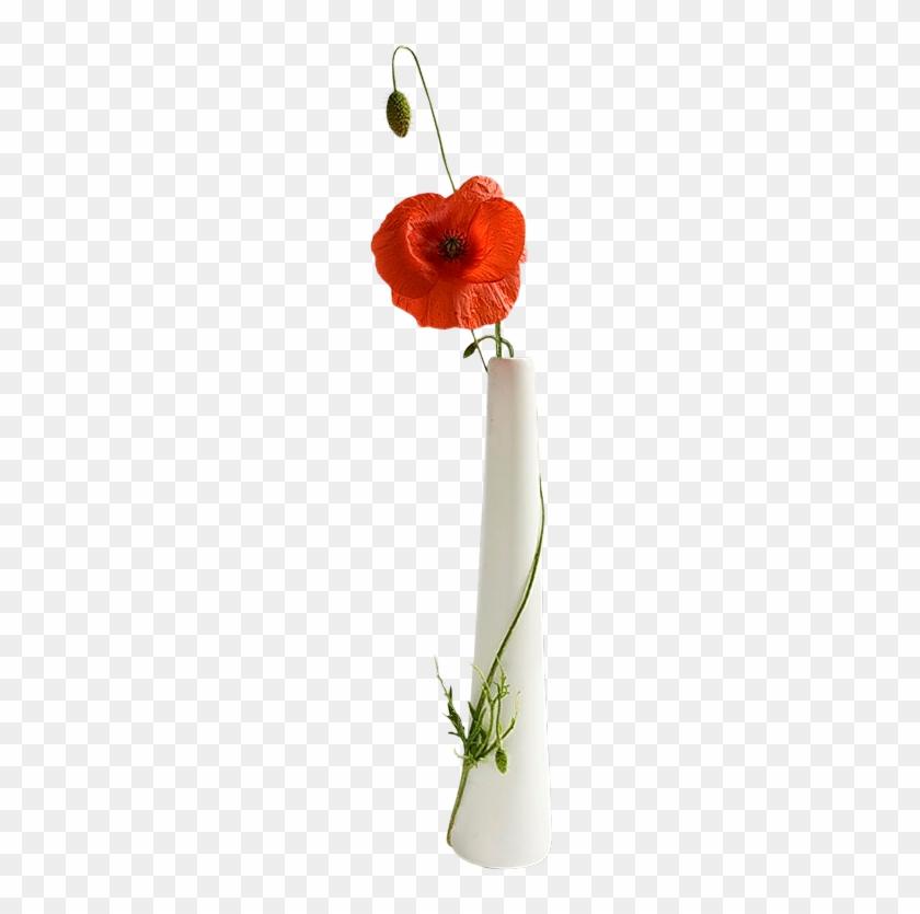 Poppies In Vases - Common Poppy #292555