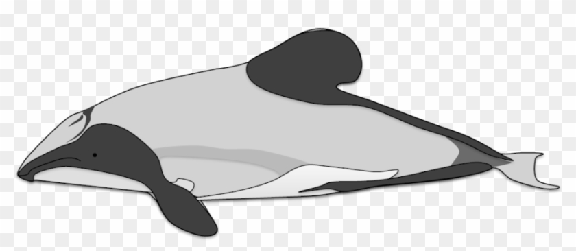 Hector's Dolphin By Adamzt2 - Draw A Hector Dolphin #292745
