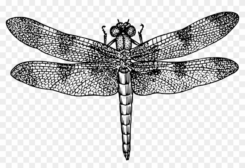 Dragonfly Insect Bug Fly Wings Png Image - Dragonfly Black And White #294011