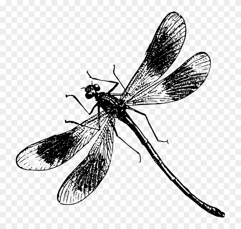 Dragon Fly Drawings - Black And White Dragonfly Png #294070