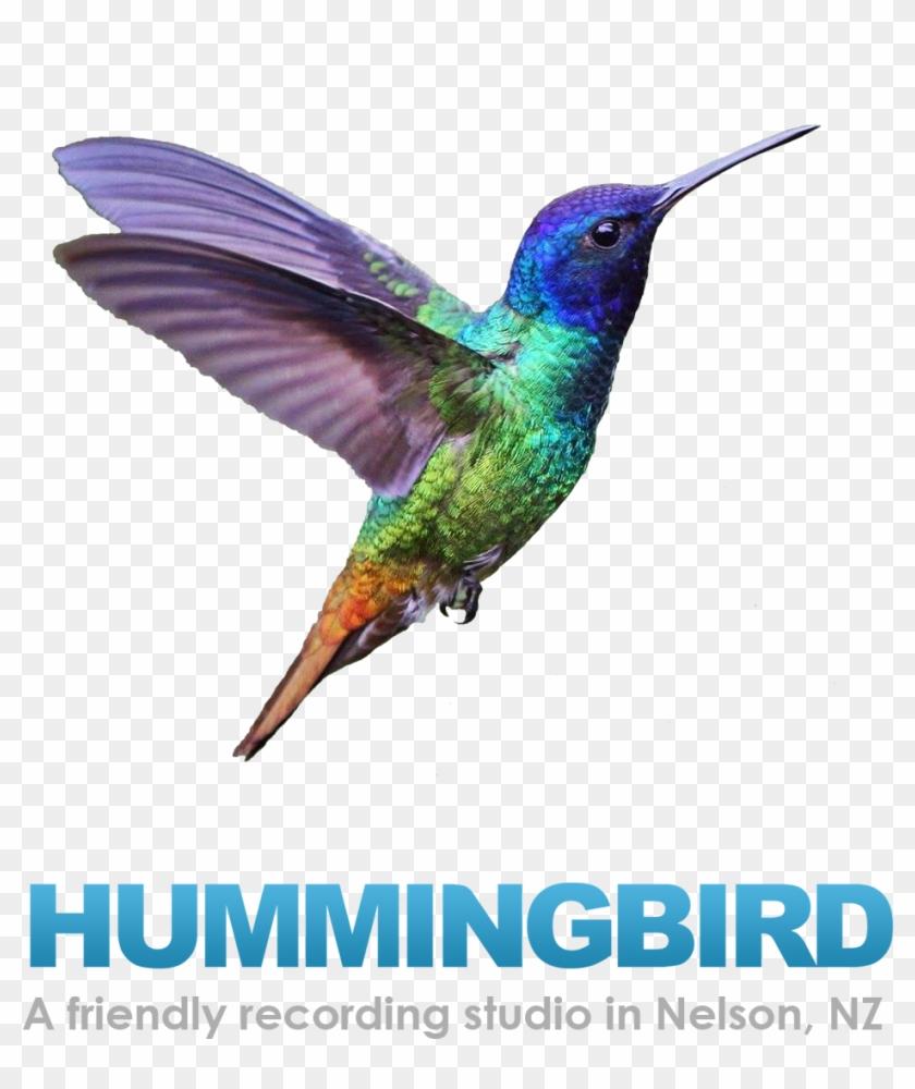 Hummingbird-studio - Maya Rae: Sapphire Birds Cd #294136