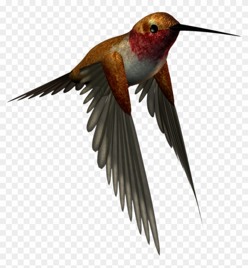 Hummingbird Clipart - High Resolution Png Images Free Download #294255