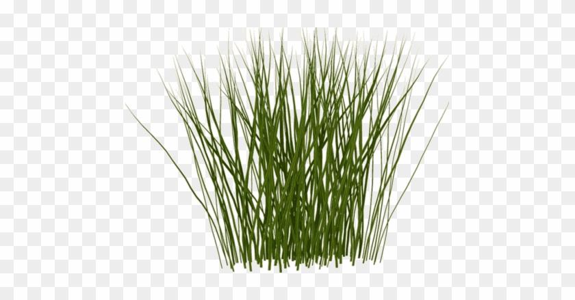 Tall Grass Texture - Tall Grass Texture Png - Free Transparent PNG