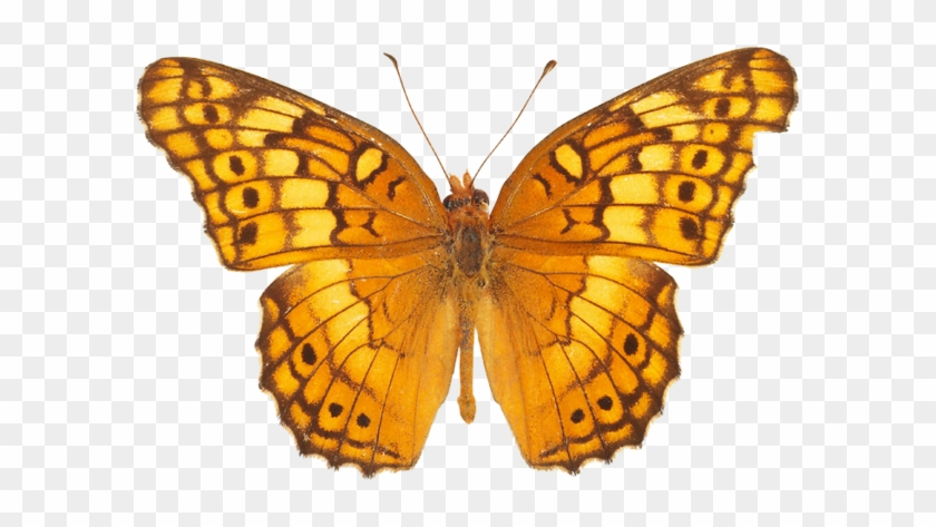 Yellow Butterfly Png Image - Butterfly Pics Free Download #296071