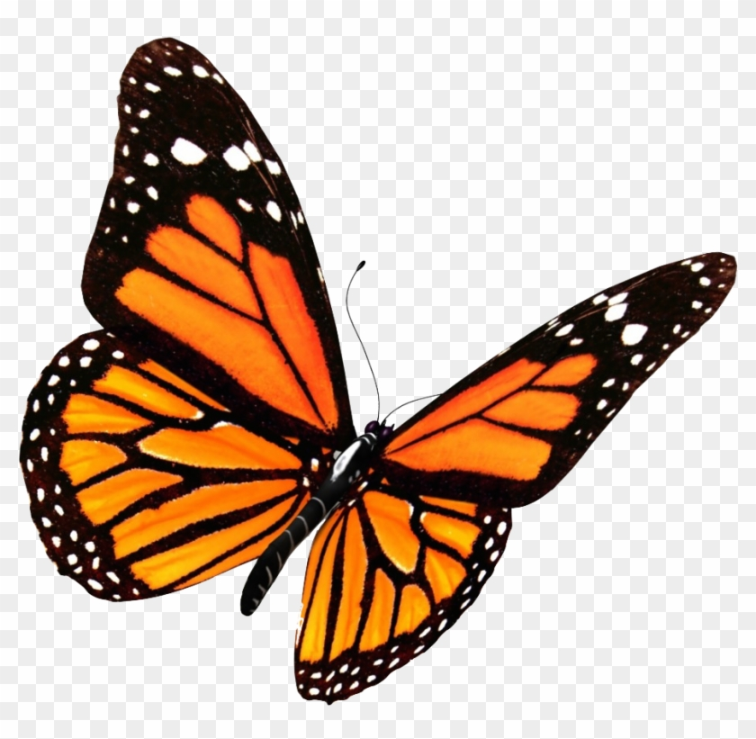 Monarch Butterfly Clipart Transparent Background Monarch Butterfly