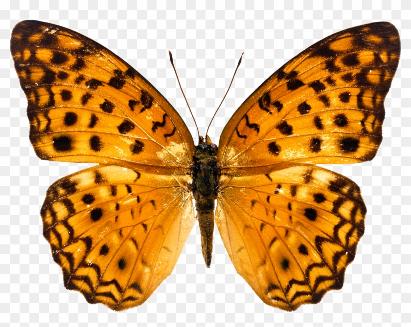 Butterfly Images Free Download #296113