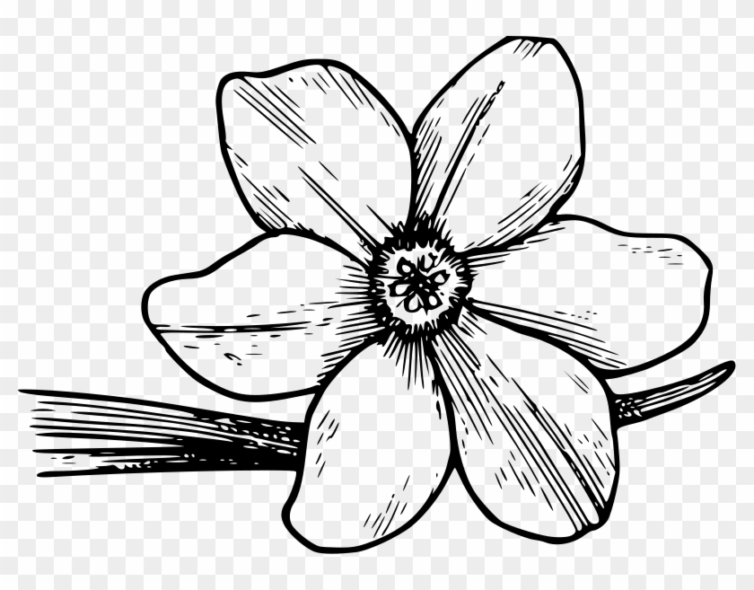 Shining Design Flower Coloring Pages Free Printable
