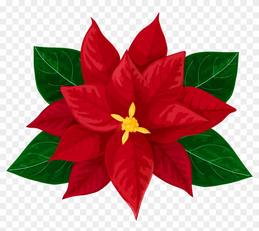 Poinsettia High Resolution Transparent #298179