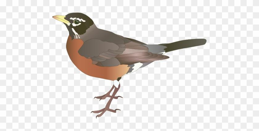 Turdus Migratorius - American Robin Clip Art #298746