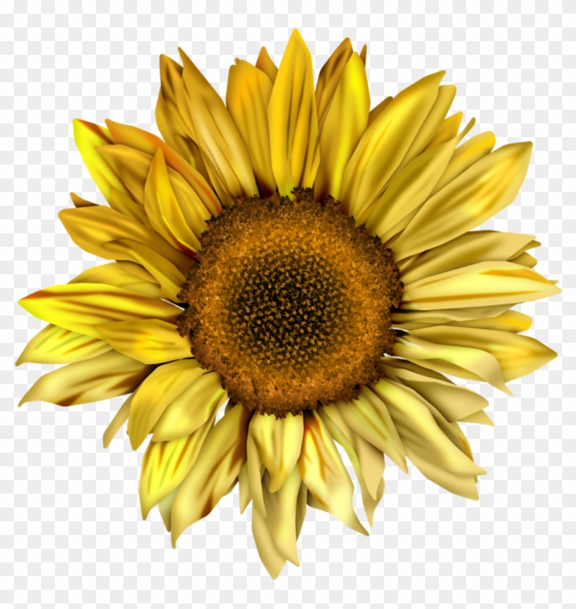Sunflowers Clipart Tumblr - Png Sunflower - Free Transparent