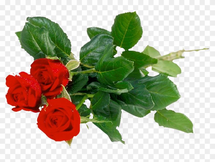 Beautiful Good Morning Images Bundle Of Roses Download - Khadi Rose Honey With Rose Petal Soap (set Of 4) #301657