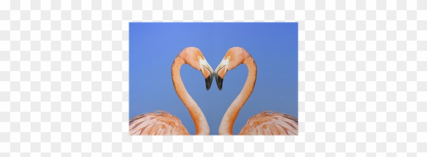 Two Pink Flamingos Like Heart On Blue Sky Background - Greater Flamingo #302374