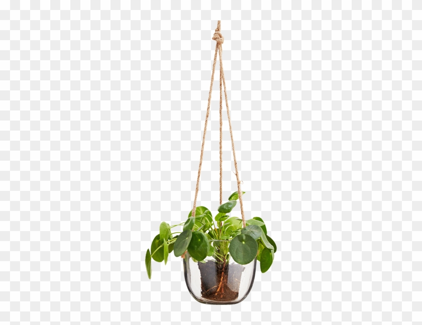 Hanging Glass Plant Pot Natural Cord - Hanging Glass Plant Png #302775