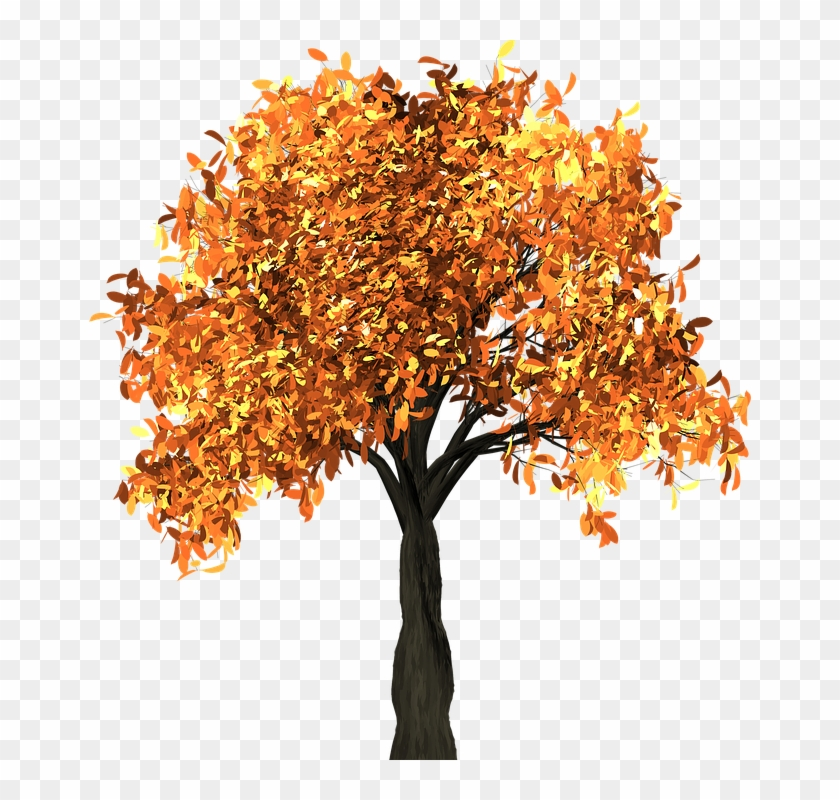 Apricot Tree And The Seasons - Chestnut Tree Autumn Clipart #302947