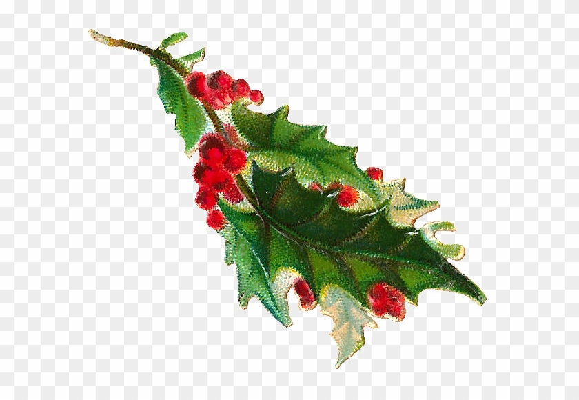 Free Christmas Clip Art - Holly Branch Png #303182