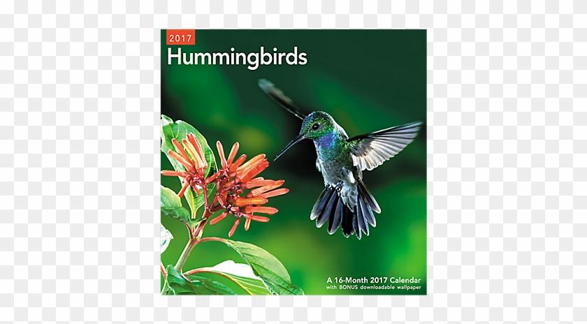 Mead 2017 Hummingbirds Wall Calendar (lme202_17) - #304078