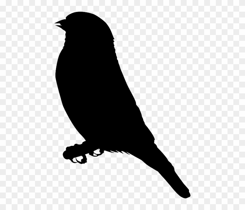 Sitting Bird Silhouette Free Vector Graphic Eagle Clipart Black