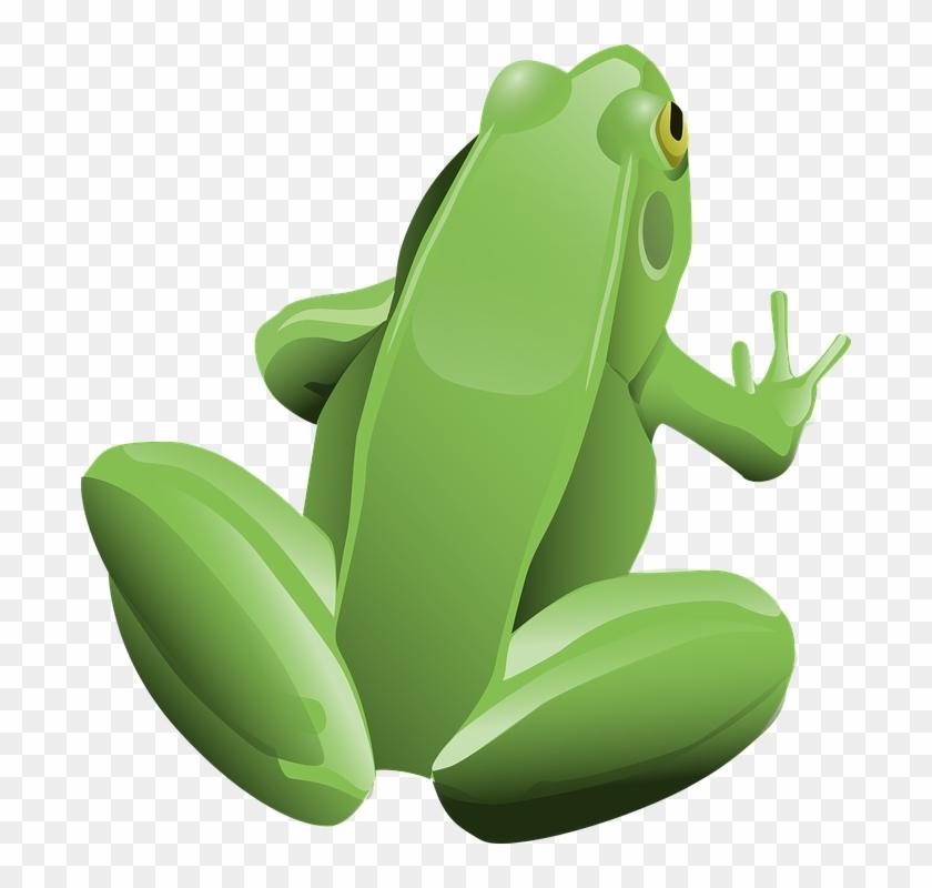 Frog, Amphibian, Animal, Green, Tree Frog - Frog Clip Art #306160