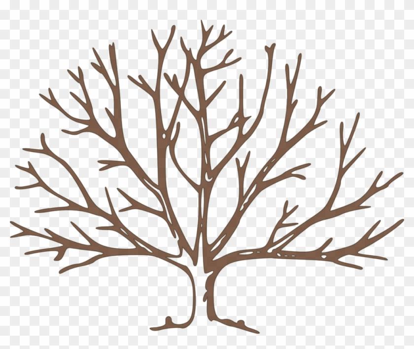 Africa Drylands Programme - Draw A Winter Tree #306786