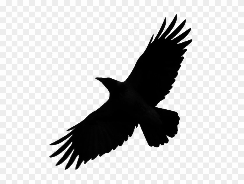 Crow Free Png Transparent Background Images Free Download