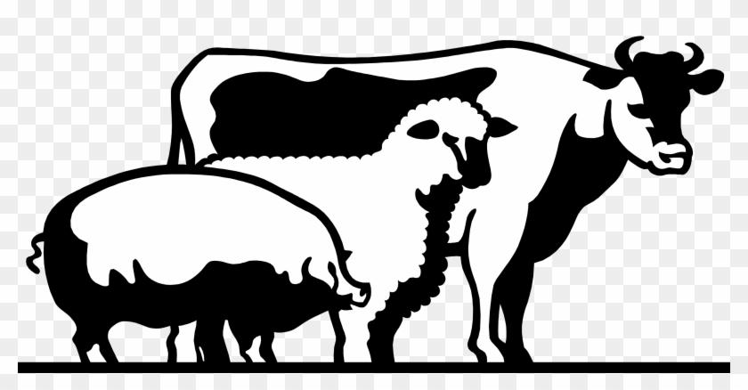 Cattle Domestic Pig Livestock Show Clip Art - Livestock #59511