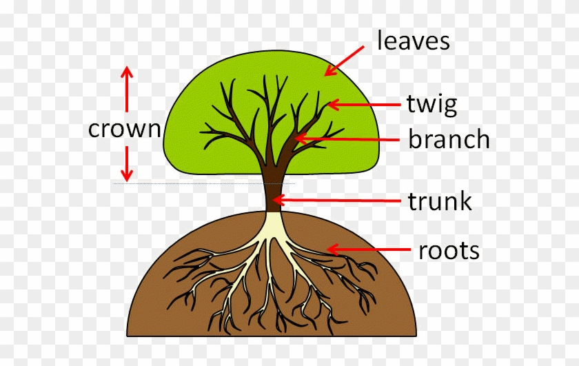 Part Of The Tree That Grows Underground - Parts Of A Tree #310076