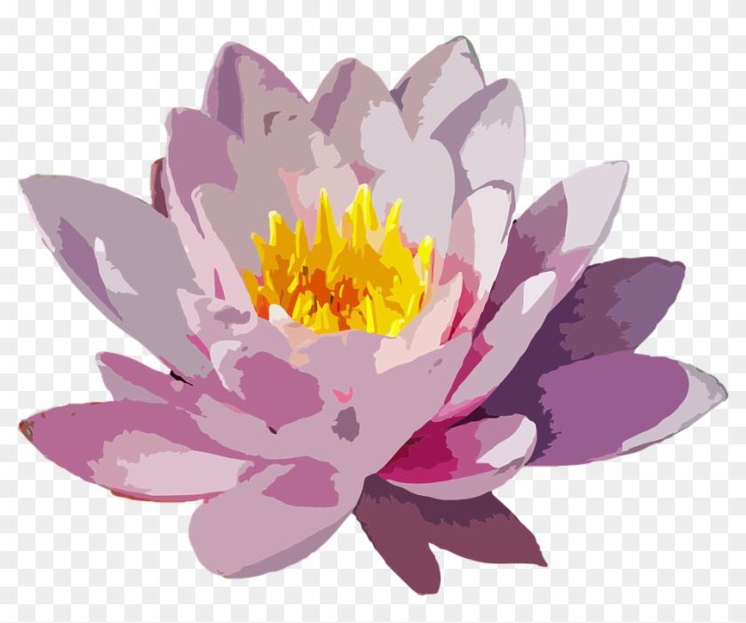 Cartoon Lotus Flower 20 Water Lily Flower Png Free Transparent