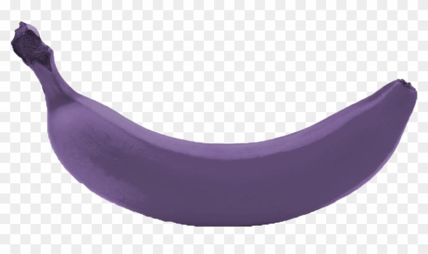 4 Royal Purple Banana Trees Kens Nursery - Purple Banana #310911