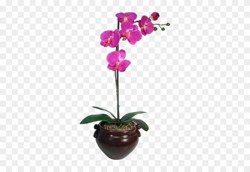 Arana Альбом «clipart / Clipart5 / Orchid» На Яндекс - Purple Orchid #311110