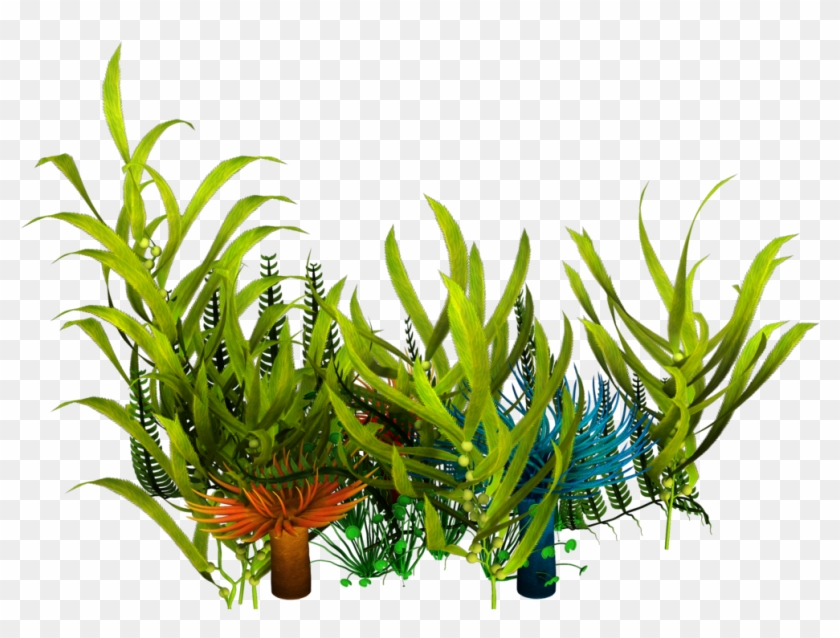 Underwater Aquatic Plants Seaweed Clip Art - Sea Plants Png Transparent #315716