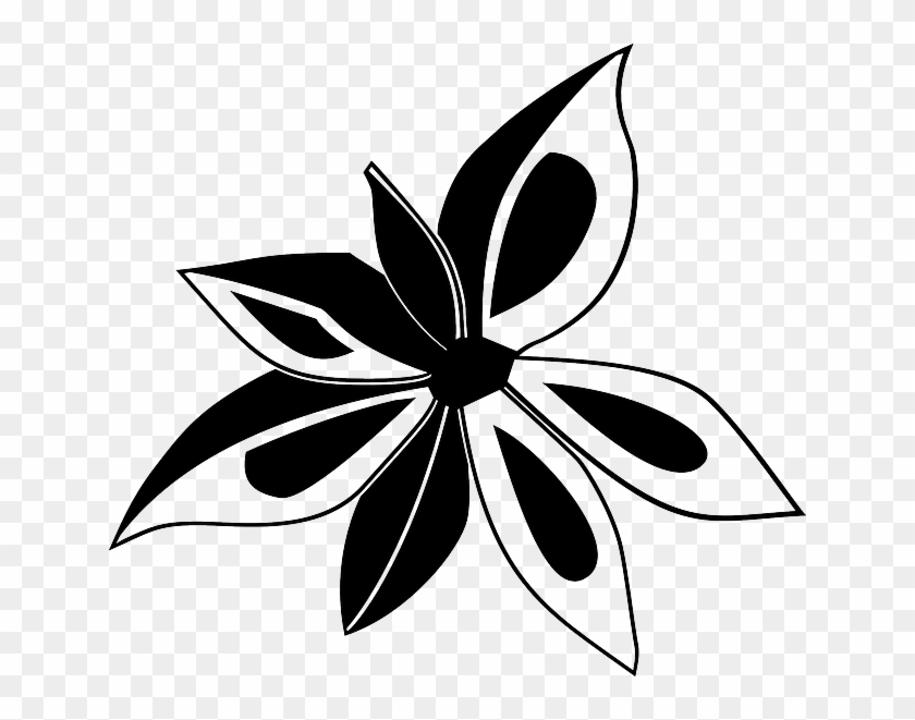 Anise Outline Star Flower Plant Cooking Anise