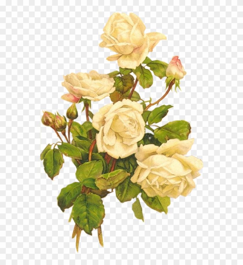 Yellow Roses Bumblebee Vintage White Rose Png Free Transparent