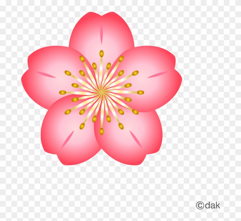Free flower material cherry pictures of clipart and cherry blossom free flower material cherry pictures of clipart and cherry blossom flower icon mightylinksfo