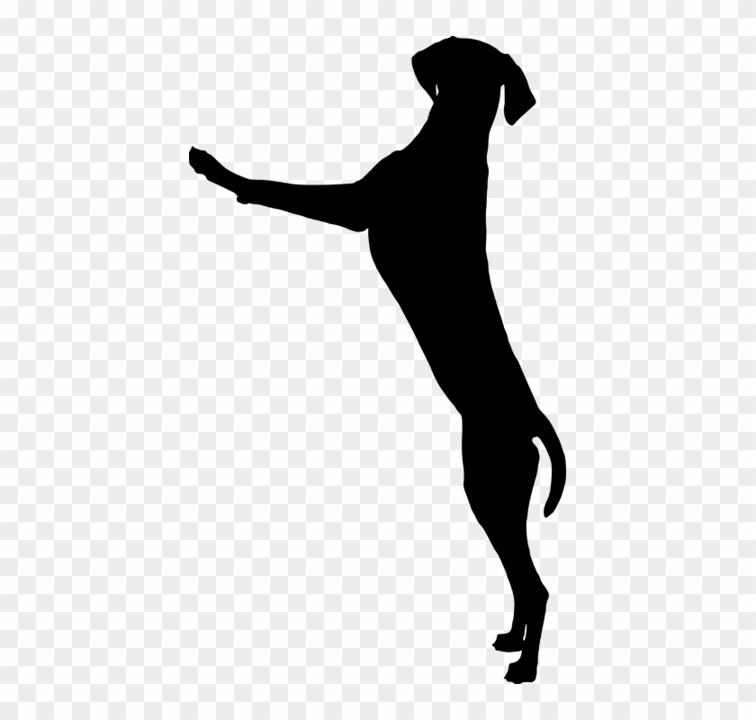 How Can I Stop My Dog Jumping Up On People - Dog Standing Silhouette #321003