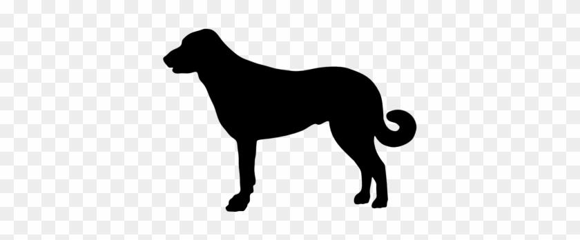Anatolian Shepherd Dog Bib #321978