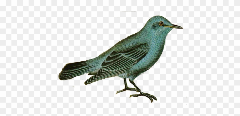 Free Vintage Bird Image For Bottle Caps Jewelry - Bird Blog Vintage Background #328743